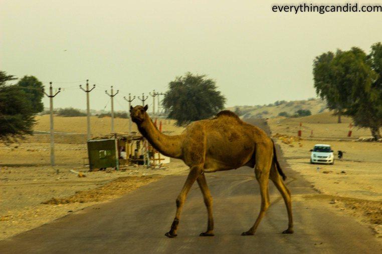 Self Drive, Road Trip, Tanot, India, Rajasthan, Ford Figo, Bikaner, Mandawa, Haveli, Travel, Photography, Photo, forts, Desert, Thar, Camel, Bhujia, Jaipur, Desert Safari, Camel Ride