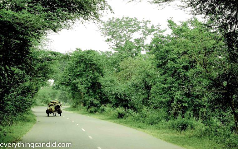 Delhi Lucknow, Self Drive, Road Less Travelled, 2014, Travel, Blog