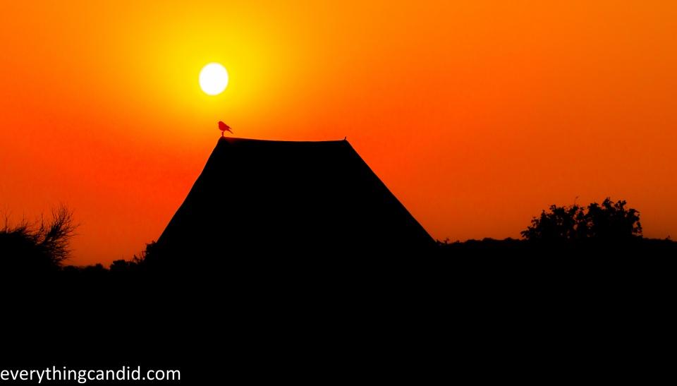 Bird, Thar, Travel, Freedom, Photography, Desert Safari