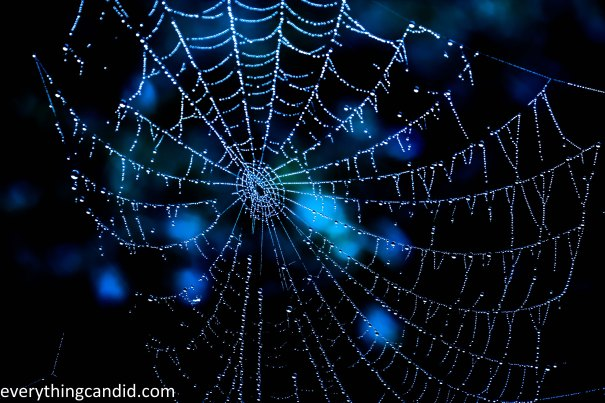 Water, nature, Spider Web, maharashtra