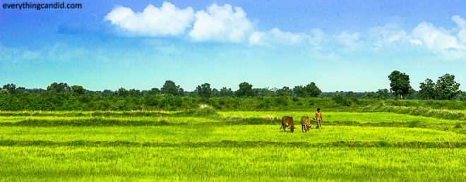 Chhattisgarh, Travel. Road Trip, Landscape,