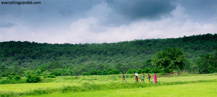 Paddy Farmesr Strolling thru Landscape