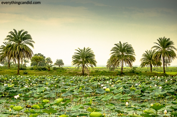 Go Chhattisgarha nd explore Natural Beauty