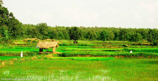 Chhattisgarh, Travel, Landscape, India, Road Trip