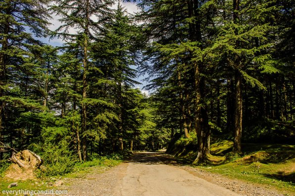 Near Chail. Instead of going via Shimla, we detoured from Kandaghat toward Chail and Kufri