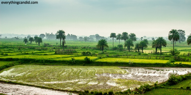 Paddy FIeld, Landscaped field from Chhattisgarh. Incredible India