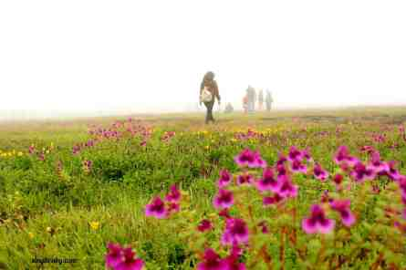 walking-around-kaas-plateau