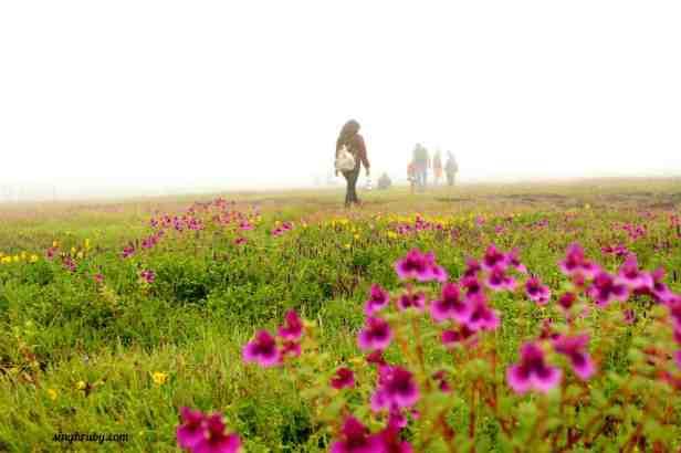 walking-around-kaas-plateau